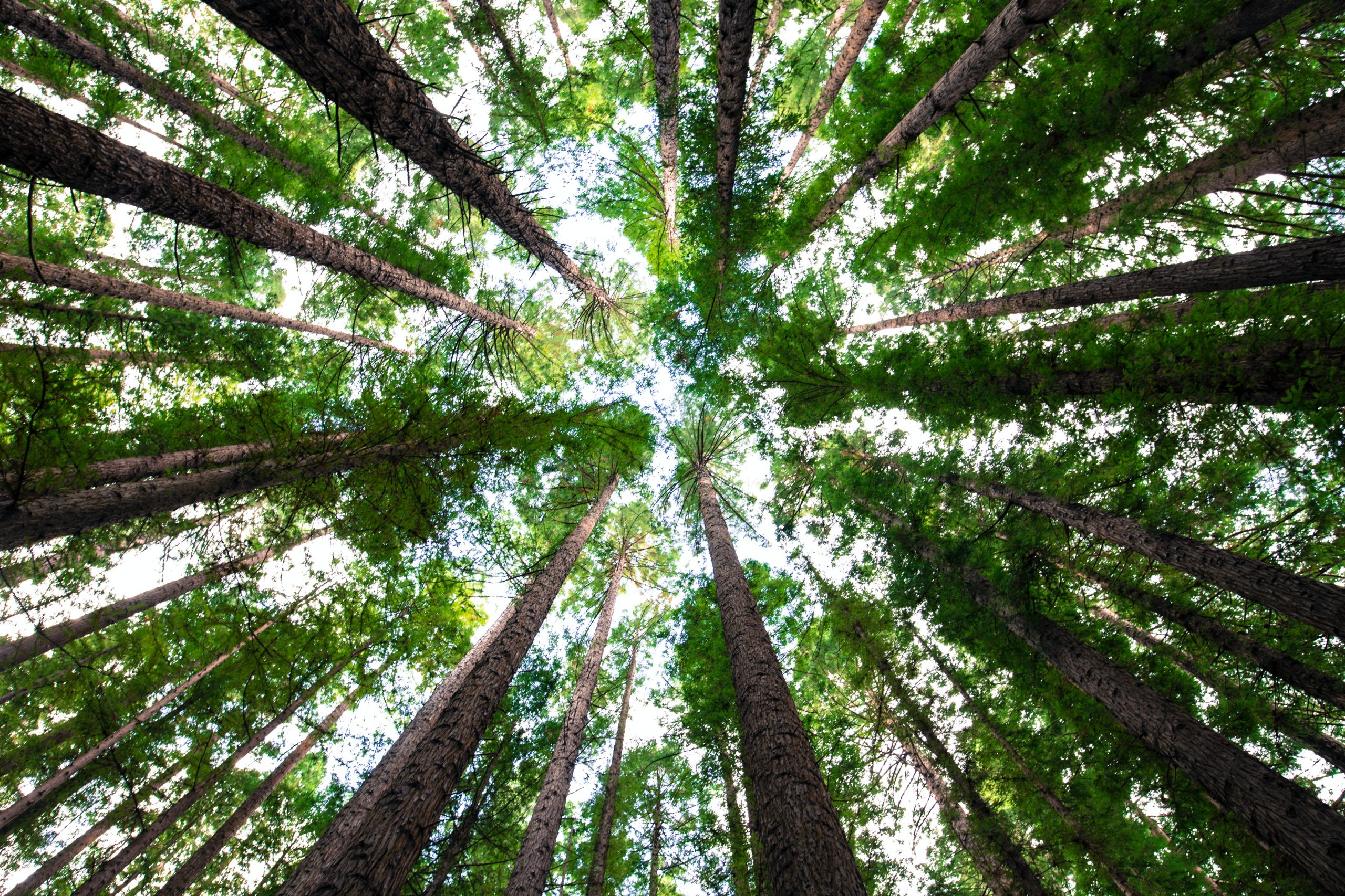 Building Greener Cities With Tree Surveys: SPR Interviews Davey Resource Group